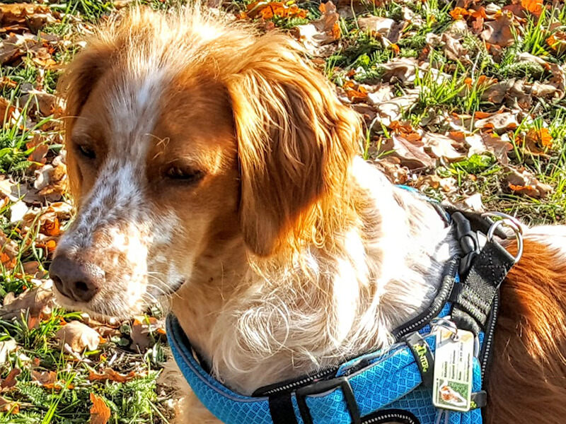 Hund von Kunde mit Hundeausweis 5