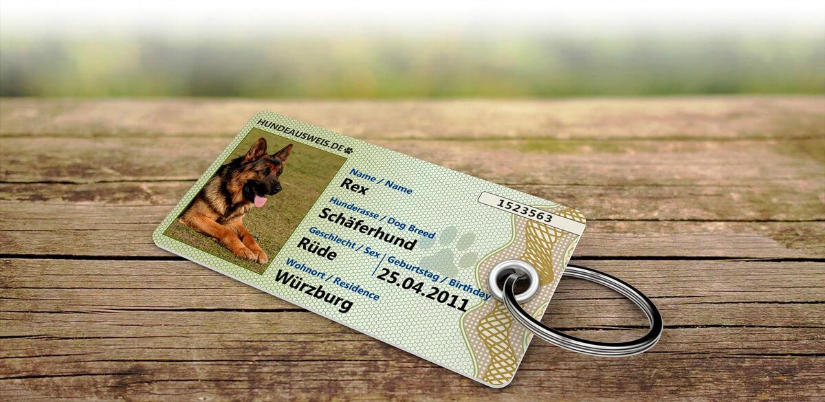 Hund trägt einen Hundeausweis am Halsband. Er hat auch Spaß am Spielen in der Natur.