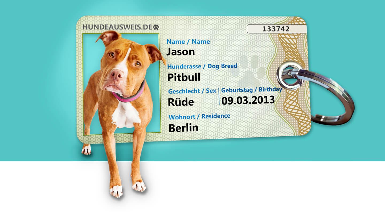 Hund der Rasse Pitbull welcher links im Hundeausweis steht. Er steht an der Stelle wo eigentlich das Foto zu sehen ist. Er neigt dabei den Kopf nach links neigt und schaut super süß