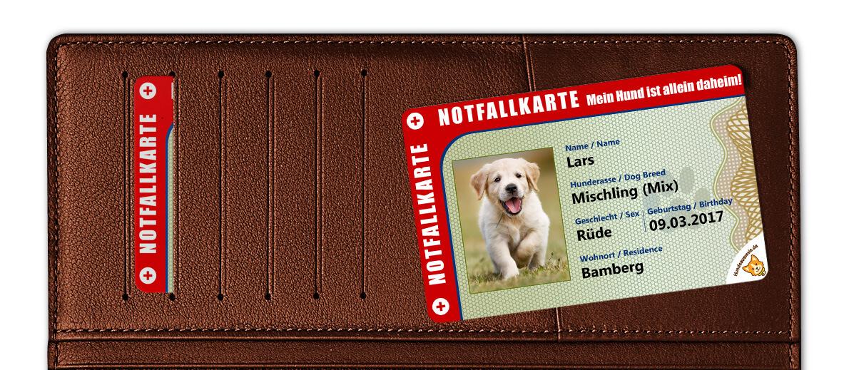 Vorderseite der Notfallkarte für Hundebesitzer liegt auf Damengeldbeutel