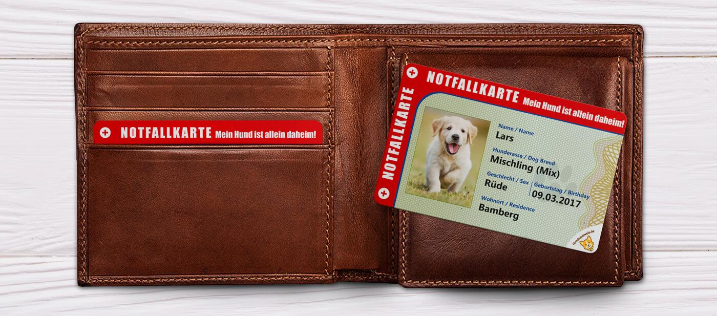 Vorderseite der Notfallkarte für Hundebesitzer liegt auf Herrengeldbeutel