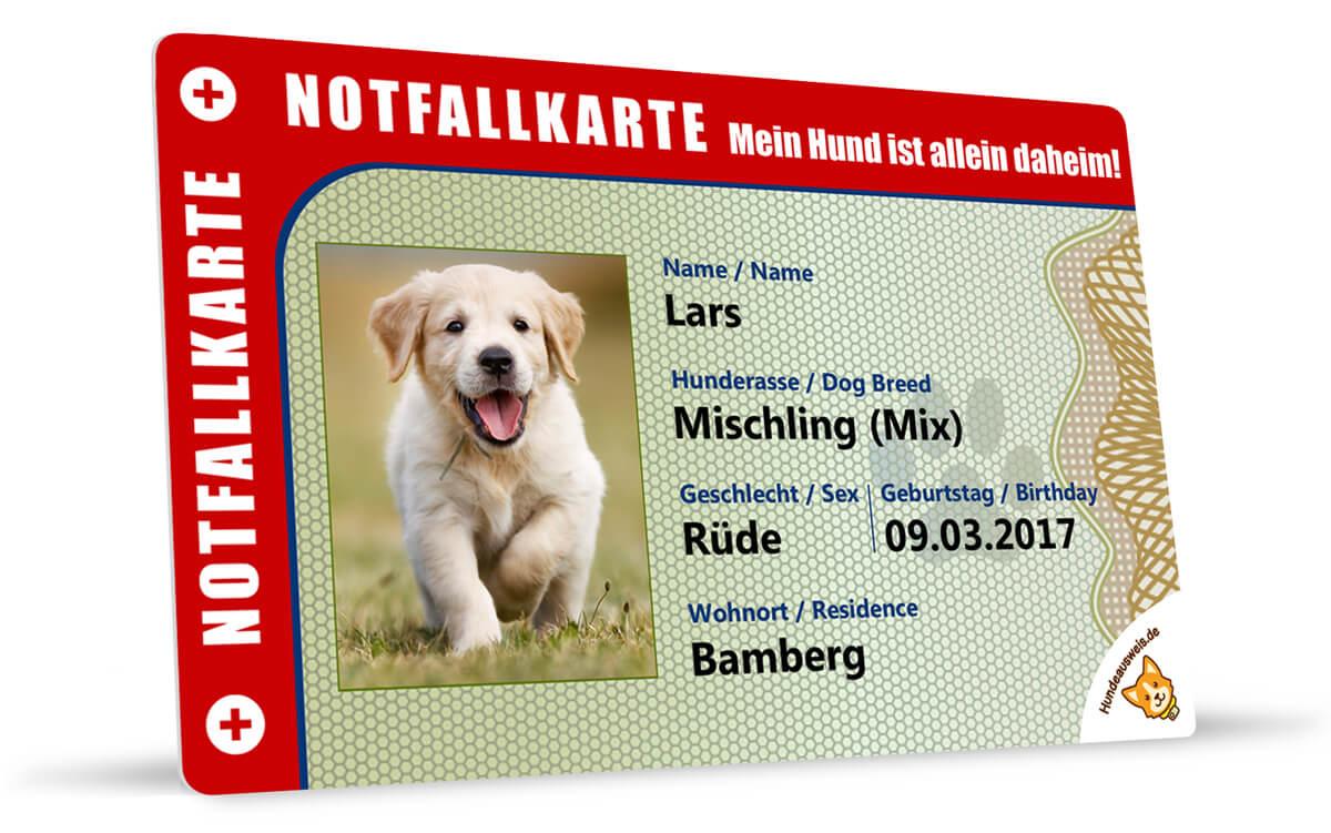 Notfallkarte für Hundebesitzer Vorderseite