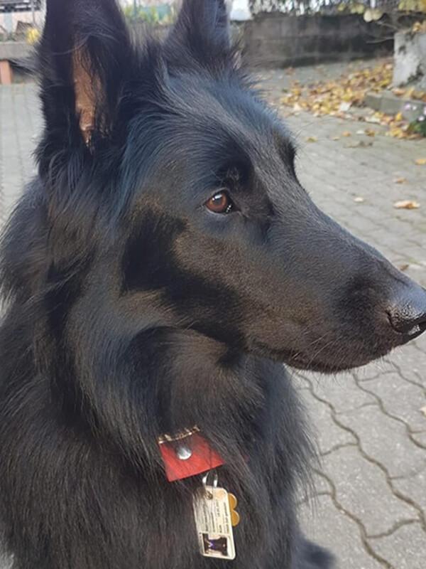 Hund von Kunde mit Hundeausweis 6